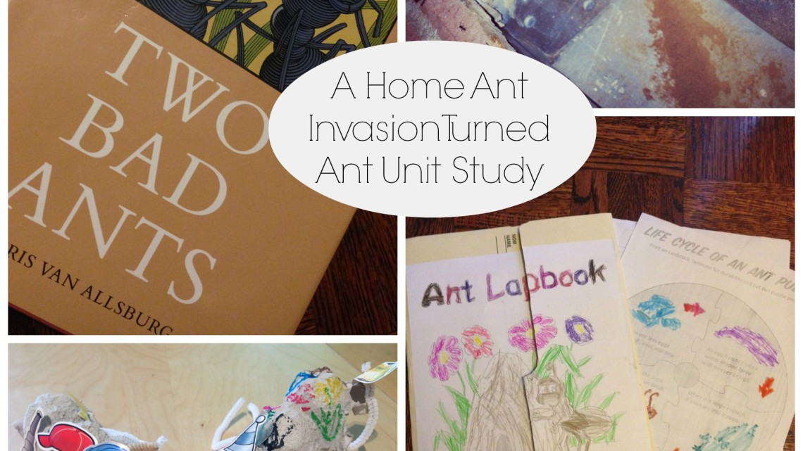 A Home Ant Invasion Turned Unit Study